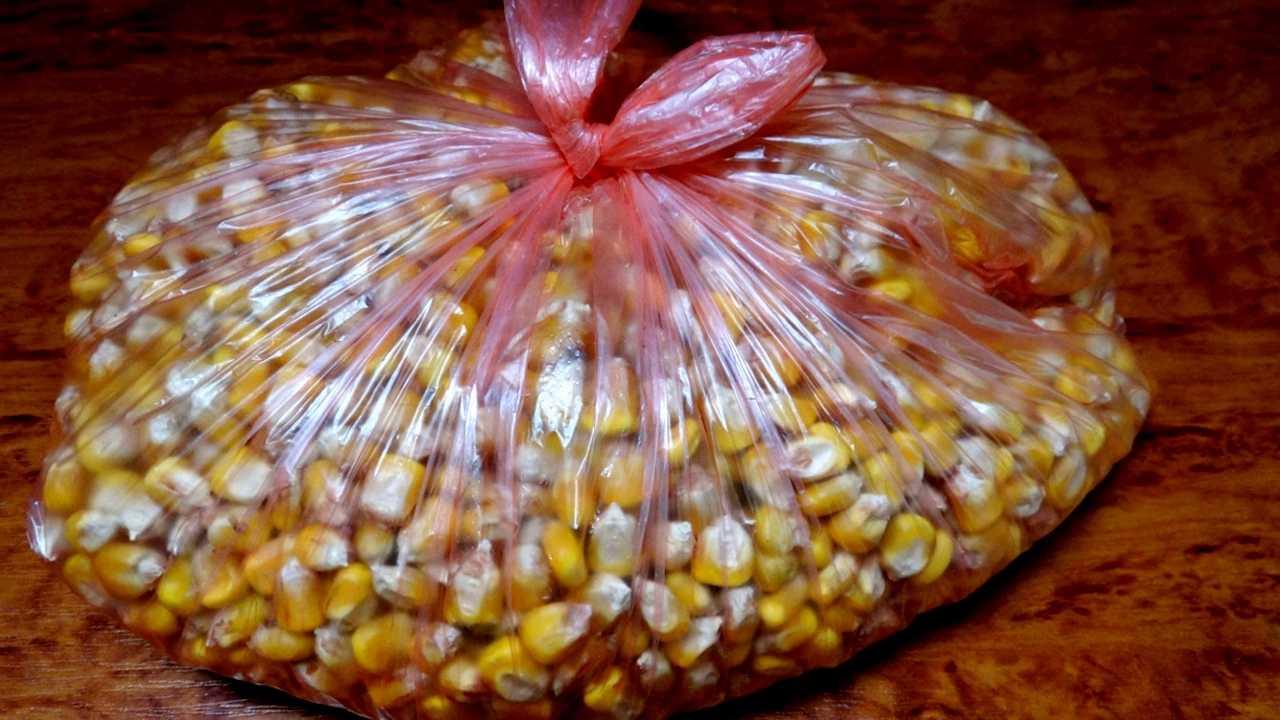 ферментированная кукуруза для рыбалки приготовление
