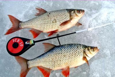 Рыбалка на красноперку зимой