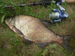 рыбалка на леща с фидером