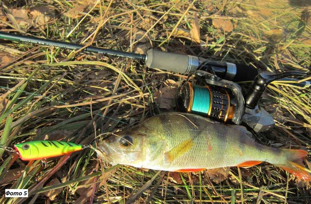 Ловля прудового окуня с берега ультралайт спиннингом