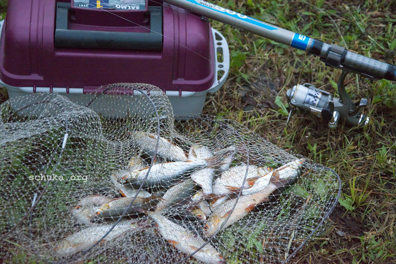 Снасти для ловли плотвы