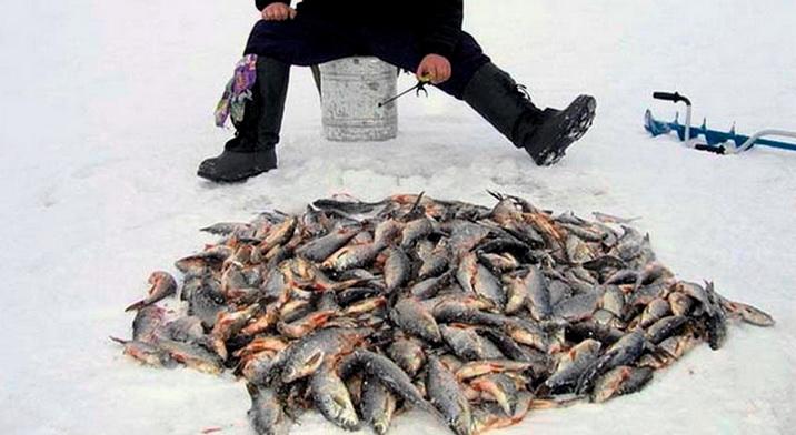 Большие уловы зимой на безмотылку