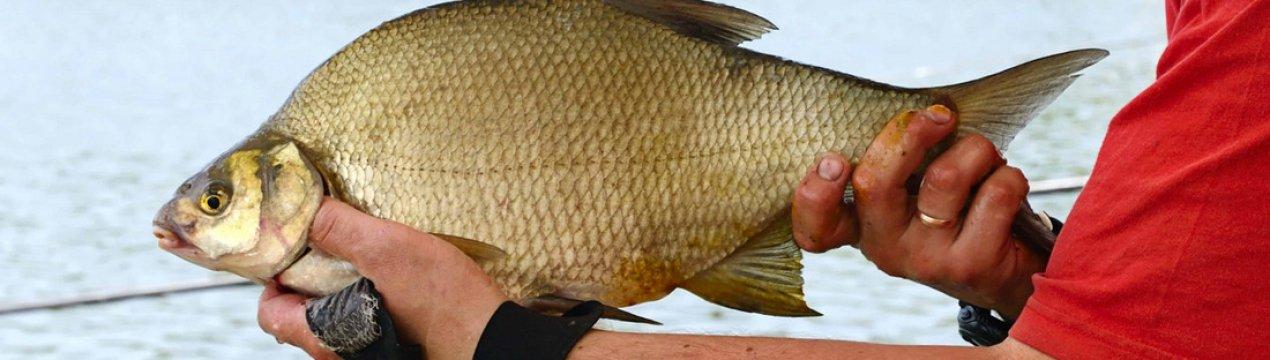 Как сварить пшено для прикорма леща при рыбалке на фидер