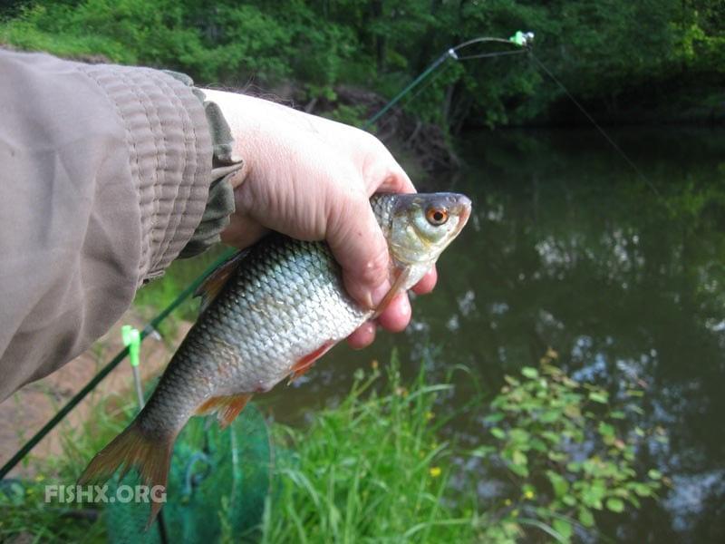 Ловля плотвы на малой реке
