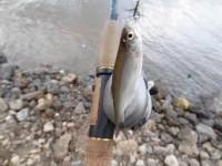 Какие поплавки для ловли карася лучше выбрать?