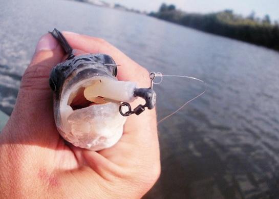 поводковый материал ловит рыбу